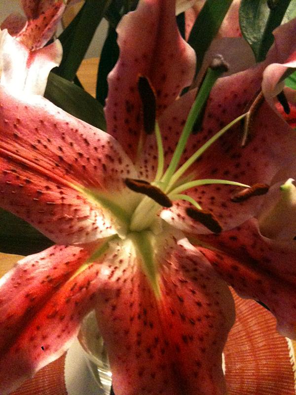 Veckans blommor vecka 13 är liljor