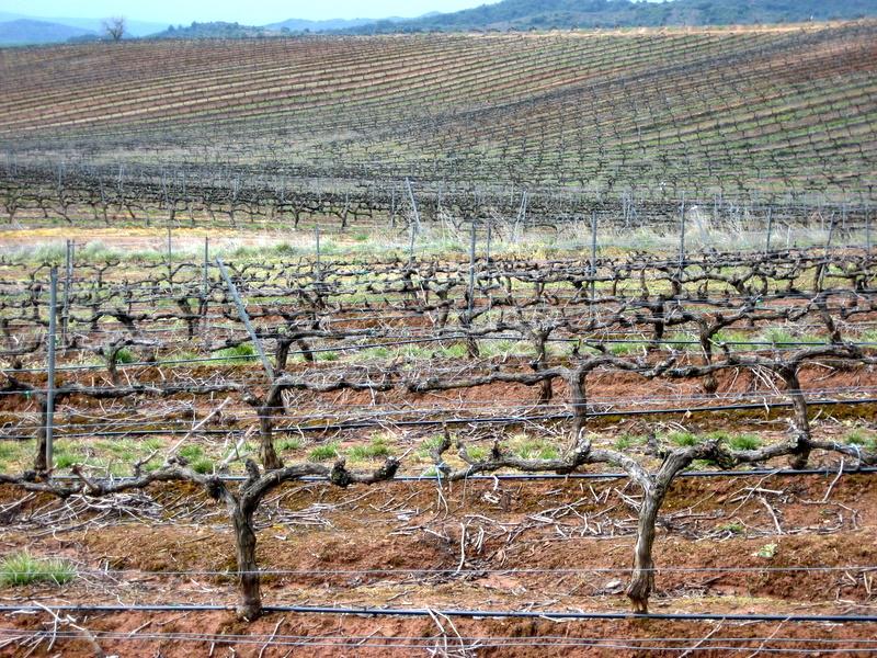 Vinstockar så långt ögat kan nå, vi gick ju igenom Rioja
