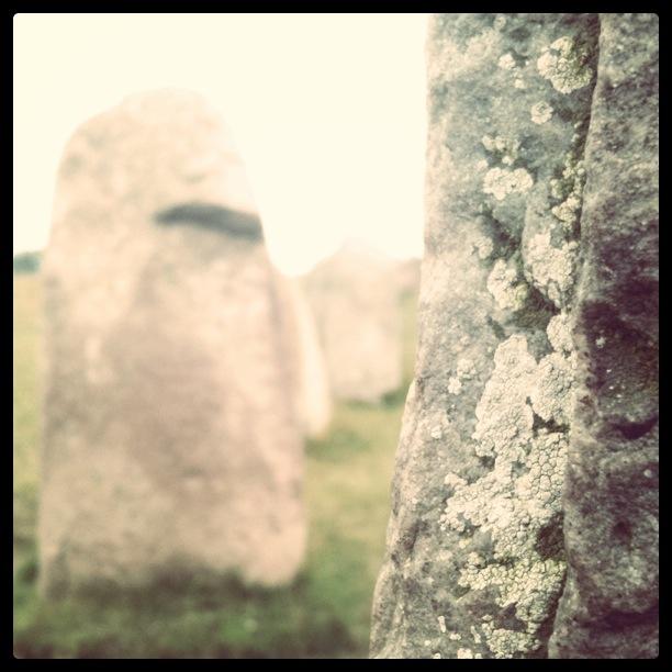 Ales stenar, en fornlämning höft upp på ett fält med kor och får som betar