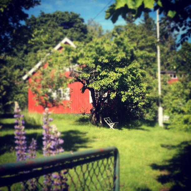 Drömmen om en trädgård, med en liten bänk under fruktträdet