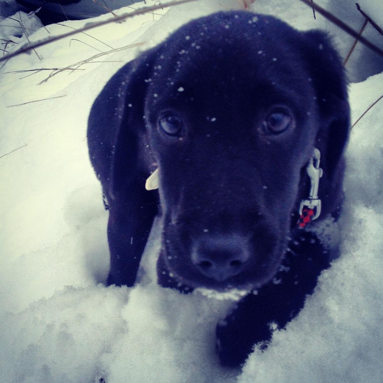 Cujo är ute i snön