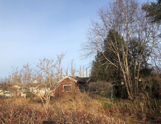 liten röd stuga med förtäckta fönster bakom mycket avlövad växtlighet